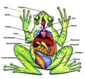 A Writer's Leap (image: http://zeitzer.com/biologysite/)